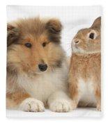 Rough Collie Pup With Rabbit Fleece Blanket