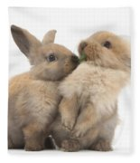 Sandy Rabbits Sharing Grass Fleece Blanket