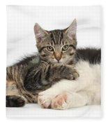 Tabby Kitten & Border Collie Fleece Blanket