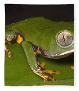 Tiger Stripe Monkey Frog Fleece Blanket
