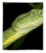 Two Striped Forest Pit Viper Fleece Blanket