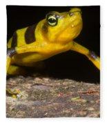 Harlequin Toad Fleece Blanket