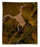Common Frog Fleece Blanket