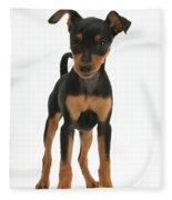 Miniature Pinscher Puppy Fleece Blanket