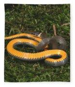 Northern Ringneck Snake Fleece Blanket