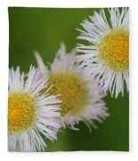 Wildflower Named Robin's Plantain Fleece Blanket