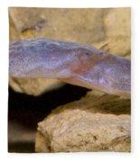 Austin Blind Salamander Fleece Blanket