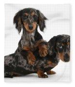 Dachshund Pups Fleece Blanket
