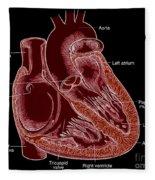 Illustration Of Heart Anatomy Fleece Blanket