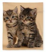 Tabby Kittens Fleece Blanket
