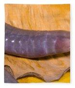 Congo Caecilian Fleece Blanket