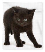 Kitten Fleece Blanket