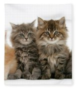 Maine Coon Kittens Fleece Blanket