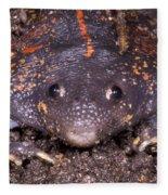 Mexican Burrowing Toad Fleece Blanket