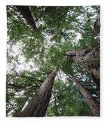 Redwoods Sequoia Sempervirens Fleece Blanket