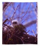 A Baby Red Tail Gazing From Its Nest Fleece Blanket