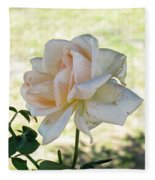 A Beautiful White And Light Pink Rose Along With A Bud Fleece Blanket