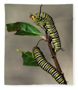 A Pair Of Monarch Caterpillars Fleece Blanket
