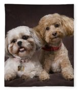 A Shihtzu And A Poodle On A Brown Fleece Blanket