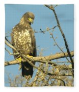 A Young Eagle Gazing Down  Fleece Blanket
