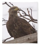 A Young Eagle In The Midst Of Change  Fleece Blanket