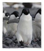 Adelie Penguin Pygoscelis Adeliae Group Photograph By Hiroya Minakuchi