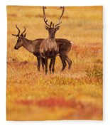 Adult Caribou In The Fall Colours Fleece Blanket
