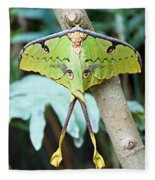 African Moon Moth 1 Fleece Blanket