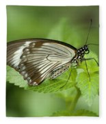 African Papilio Dardanus Butterfly Fleece Blanket
