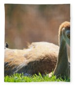Afternoon Reprieve Fleece Blanket