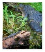 American Alligators Fleece Blanket