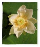American Lotus Nelumbo Lutea Opening Fleece Blanket
