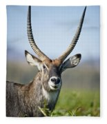 An Antelope Standing Amongst Tall Fleece Blanket