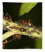 Ants Tending Aphids Fleece Blanket