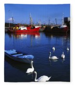 Ardglass, Co Down, Ireland Swans Near Fleece Blanket