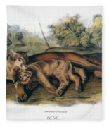 Audubon: The Cougar Fleece Blanket