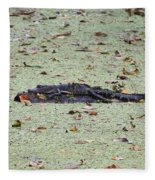Baby Gator In The Swamp Fleece Blanket