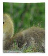 Baby Goose Takes A Break Fleece Blanket