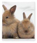 Baby Lionhead Rabbits Fleece Blanket