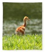 Baby Sandhill In The Sunshine Fleece Blanket