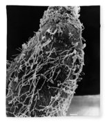 Bacteria On Sorghum Root Tip Fleece Blanket