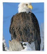 Bald Eagle Haliaeetus Leucocephalus Fleece Blanket