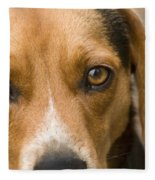 Beagle Hound Dog Eyes Of Love Fleece Blanket