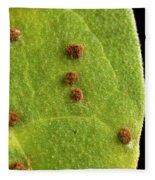 Bean Leaf With Rust Pustules Fleece Blanket