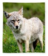 Beautiful Coyote In Alaska Fleece Blanket