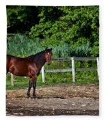 Beauty Of A Horse Fleece Blanket