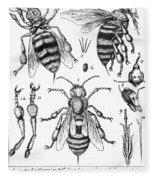 Bee Anatomy Historical Illustration Fleece Blanket