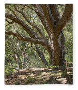 Bench And Tree In Cambria II Fleece Blanket
