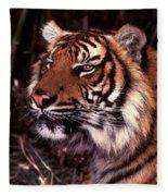 Bengal Tiger Watching Prey Fleece Blanket