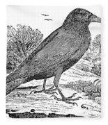 Bewick: Raven Fleece Blanket